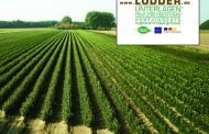 LODDER OFFERS QUALITY ROOTSTOCKS