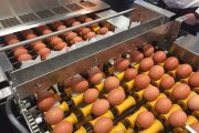 THE STORY BEHIND 'ROCK 'N ROLL' A hidden jewel that saves eggs...