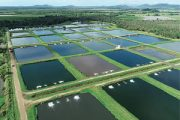 Pebble Labs and Virbac announce the signing of a comprehensive commercial agreement for aquaculture disease prevention