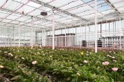Monitoring an important greenhouse gas