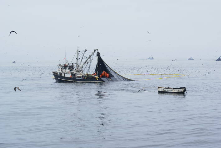 Assessing El Niño's impact on fisheries and aquaculture around the world
