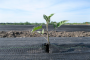 Clariant's bio-based additives for biopolymers awarded OK compost INDUSTRIAL & OK biodegradable SOIL certification