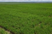 OFRF and FFAR Partner to Fund Soil Health Research at Montana State University
