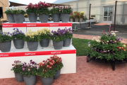 Explore The PanAmerican Seed FlowerTrials® From Home! Register for FlowerSTREAM, June 11, And Download The App