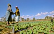FAO partners with the Adaptation Fund to help vulnerable countries fight the impact of climate change