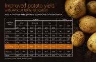 New Perstorp fertilizer solution shown to increase potato yield by up to 22 percent