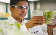 Tropic Biosciences partners with BASF to develop innovative traits for growers