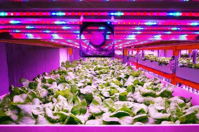 4 Facts You Need to Know About Vertical Farming LED Lighting