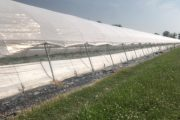Melon and watermelon: less water consumption and better uniformity of plants thanks to PRISMA from Arrigoni