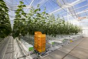 Pure Harvest Smart Farms Selects Dutch Greenhouse Builder Bom Group for its High-Tech Farms