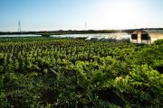Carrefour teams up with Emirates Bio Farm to sow seeds for a healthier future