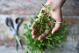 4 Tips on How to Harvest Microgreens from Growing Containers