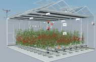 Plant Empowerment at the core of team AuTomatoes' strategy: new algorithm development