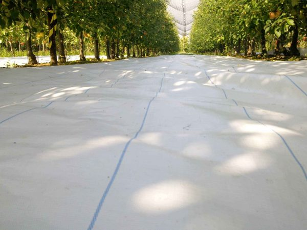 Agritela Lux© by Arrigoni protects apple and pomegranate trees