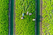 5 main benefits of modern CTRM for agriculture industry