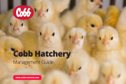 Poultry Industry Accesses Cobb Resources More Than 30,000 Times Globally