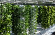 Farnek to create extensive rooftop vertical garden at new Dubai staff accommodation centre