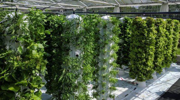 Farnek to create extensive rooftop vertical garden at new Dubai staff accommodation centre