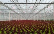 Belgian lettuce grower De Glastuin achieves increased production and faster growth cycles thanks to a full LED solution from Signify