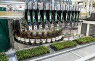 New Visser / Mayer transplanting power combo at Gartenbau Hörnes