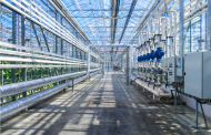 The 4 Most Common Tips for Hydroponic Growing Success
