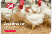Expertise in New Cobb Broiler Breeder Management Guide Helps Customers Optimize Flock Performance