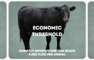Altosid® IGR, the Industry Standard for Horn Fly Control, Announces Lower Price To Protect Cattle And Bottom Lines