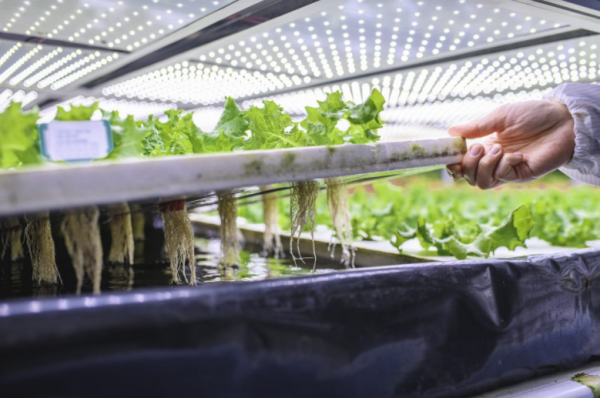Significant investment suggests credibility of vertical farming systems