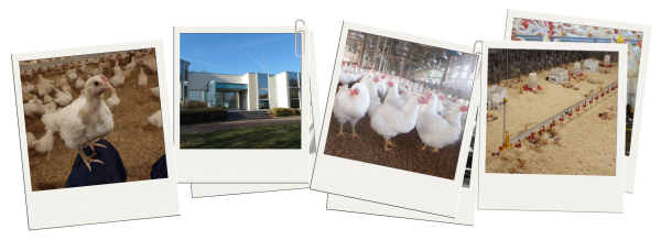 Hubbard celebrates 100 years commitment to poultry breeding