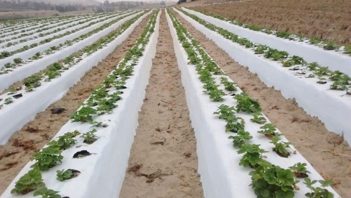 Solplast Prevents The Risk Of High Temperatures On The Soil