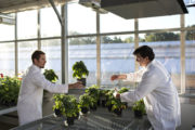 Novozymes enters agricultural biocontrol with enzymes