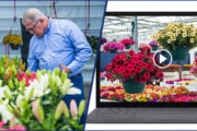 FlowerTrials® holds all options open for week 24