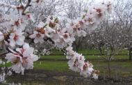 Uniform bud burst and flowering: Biolchim's winning solution