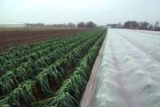 ARRIGONI ARRICOVER: CROP PROTECTION FROM SPRING FROSTS