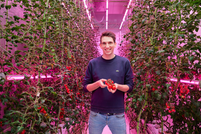 5 learnings for growing top-quality tomatoes in a vertical farm
