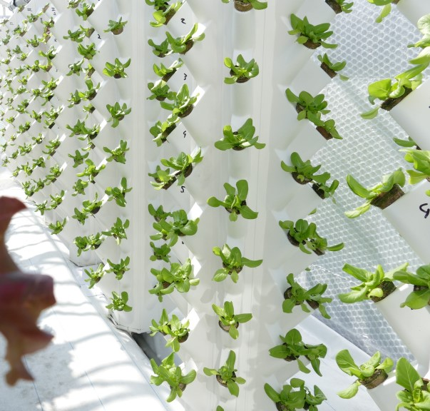 Farnek's vertical rooftop garden comes to life