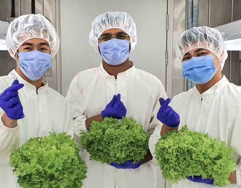 Smart Acres, UAE's Latest Hydroponic Vertical Farm, Reaches Significant Milestones Within One Year of Launch