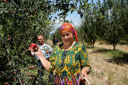 New FAO-led food security and nutrition report for Europe and Central Asia elaborates on the costs of a healthy diet