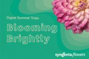 Syngenta Flowers is Blooming Brightly this Summer
