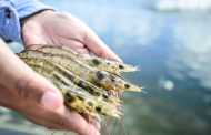 Evonik and Vland develop product to improve water quality in aquaculture for shrimp
