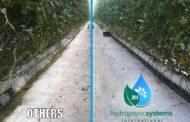 Hydroponic agriculture – Advantages and Disadvantages