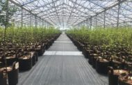 Root Pouch: The Largest Manufacturer Of Fabric Planting Bags