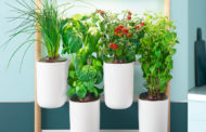 Prêt à Pousser brings sustainable & compact indoor kitchen gardens to Dubai making home growing accessible to everyone